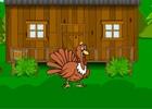 Lost Turkey Escape