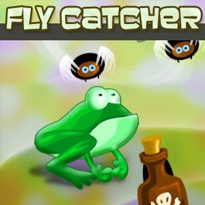 Fly Catcher